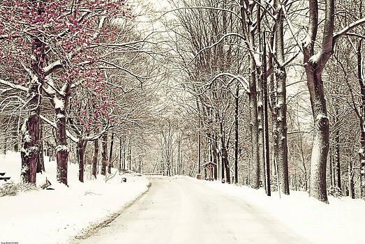 A fresh snow storm by Tony  Bazidlo