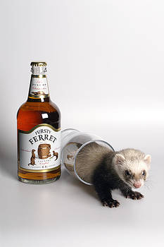 Howard Kennedy - A Glass of Fursty Ferret
