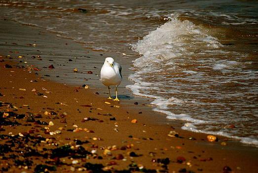 A Gull Walks alone by Michelle Cruz