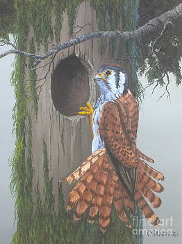 A Kestrel Home by Michael Allen
