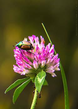 A Lady Bug by Virag Yelegaonkar