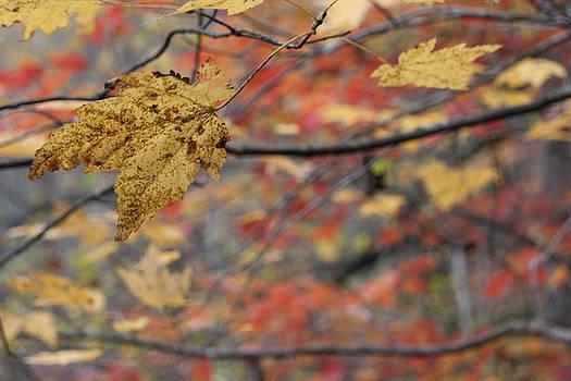 A Leaf Hangs On by Tony Hammer