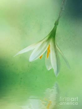 Lee-Anne Rafferty-Evans - A Little White Flower