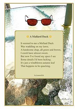 A Mallard Duck by Brian D Meredith