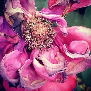 A Midsummer Flower by Tina Marie
