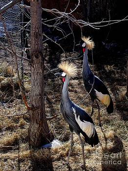 A Pair of Crowned Cranes by Donna Parlow