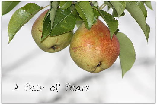 A Pair of Pears by Rosa Shannon