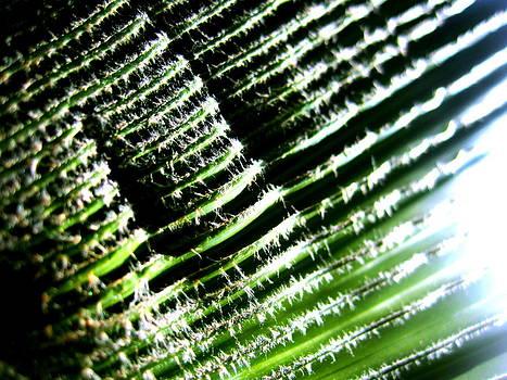 A Palmfrond by Catherine Natalia  Roche