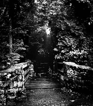 A Path of Shadow and Light by Steve Buckenberger