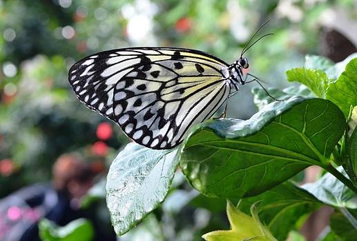 A perch to remember by Salomi Prakash
