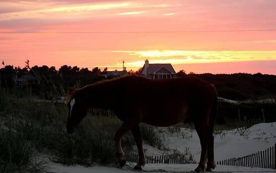 A Perfect Sunset at the Beach by Kim Galluzzo Wozniak