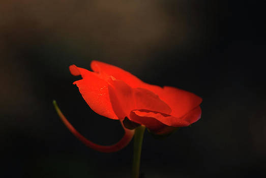 A Pop of Orange by Lori Tambakis