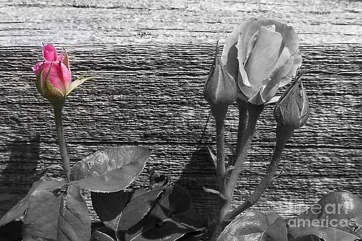A Pop of Pink by Dorrene BrownButterfield