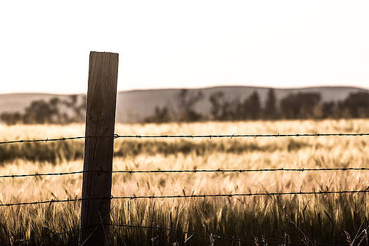 A Post and Barbed Wire by Chris Fullmer
