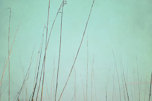 A Quiet Breath by Sharon Kalstek-Coty