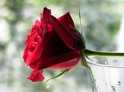 Angela Davies - A Rainy Day Rose