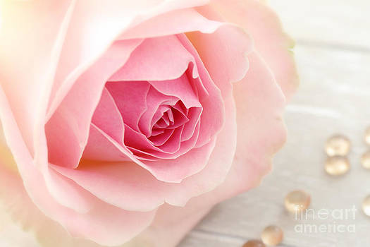 LHJB Photography - A rose