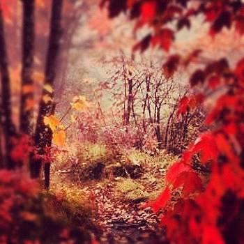A Secret Garden, A Secret Space :) by Tracey Manning