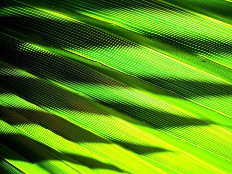 A Shadow of a Palmfrond on a Palmfrond by Catherine Natalia  Roche