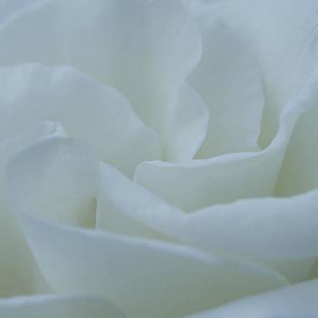 A Soft Embrace by Jen Baptist