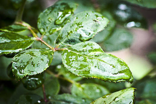A Splash of Green by Steve Buckenberger