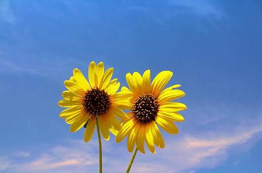 Lynnette Johns - A Sunny Pair