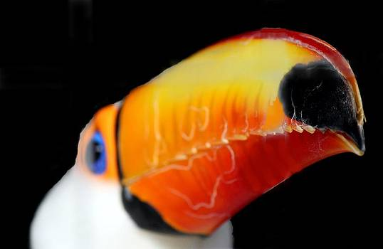 a Toucan of my love by Shiladitya Sinha