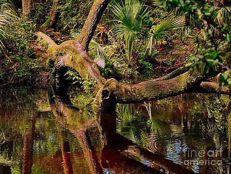 Wayne Nielsen - A Tree Bows to a Florida River