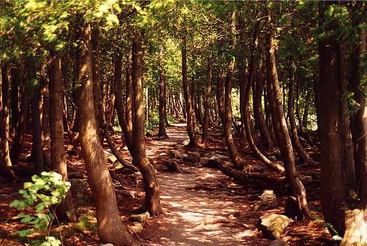 A Walk through the Cedars by Bruce Ritchie
