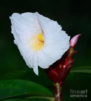 A Wild Flower by Jiss Joseph
