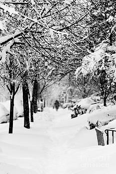 A Winter Stroll by Paul Frederiksen