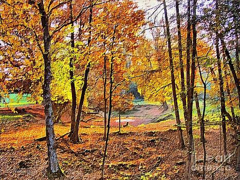 A woodland walk by Gabriele Nedilka