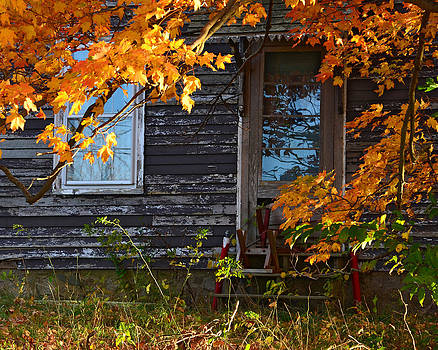Abandoned Beauty by Dave Saltonstall