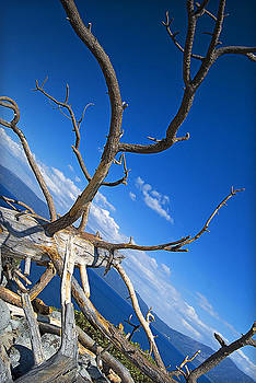 Abstract Branches by David Clark