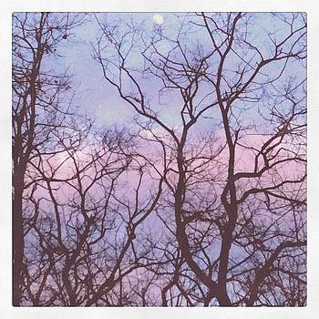 Abstract branches by Tina Marie