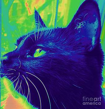 Abstract Cat by Maria Scarfone