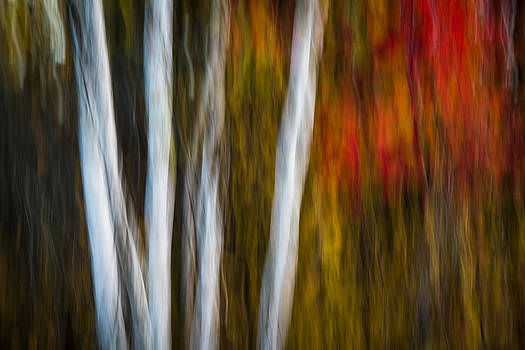 Abstract Fall by Bill Cady