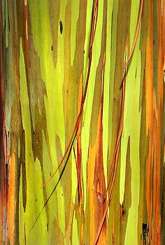 Marilyn Hunt - Abstract Rainbow Eucalyptus 1