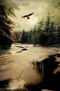 Emily Stauring - Adirondack Hawk
