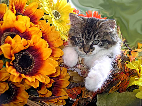 Chantal PhotoPix - Adorable Baby Animal - Cute Furry Kitten in Yellow Flower Basket Looking Down - Kitty Cat Portrait