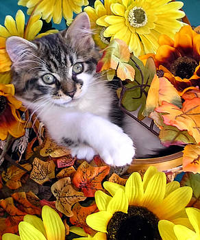 Chantal PhotoPix - Adorable Kitten with Large Eyes Chilling in a Sunflower Basket - Kitty Cat with Paws Crossed