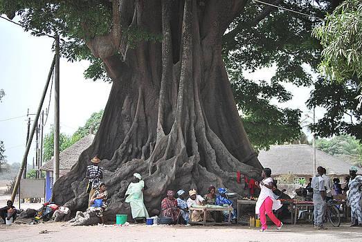 African Baobab by Kamel Rekouane