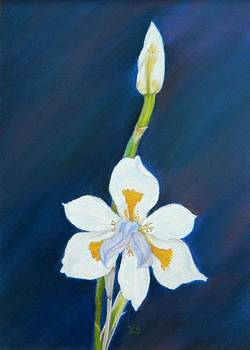 African Lily by Xenia Sease
