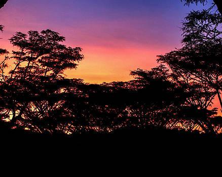 African Sunrise by Diane Geddes