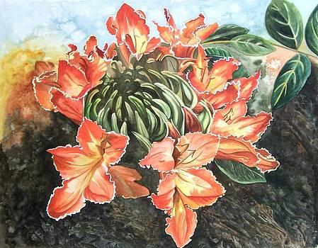 African Tulip by Karen Casciani