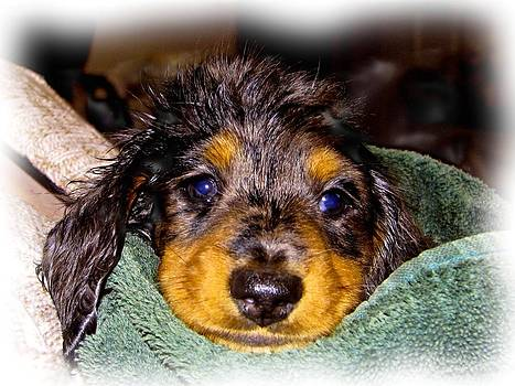 After My First bath by Victoria Sheldon