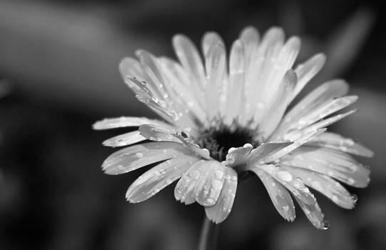 After Rain by Slava Shamanoff