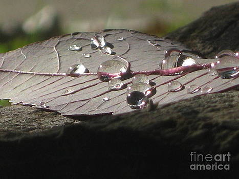 After The Rain by Donna Renier