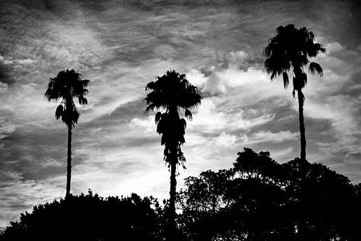 Afternoon Sun behind Palms by Mathew Tonkin Henwood