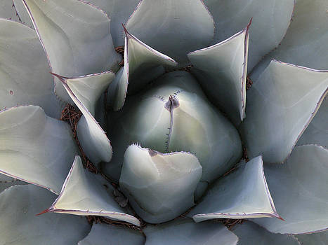 Agave by FeVa  Fotos